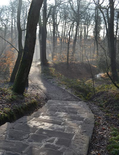 Astley park woodland