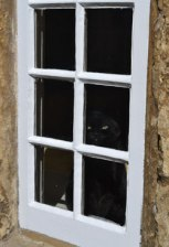 black cat in Corsham